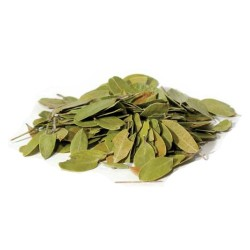 Bearberry 1oz Whole Leaves (Uva Ursi)