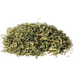 Catnip cut 2oz  (Nepeta cataria)